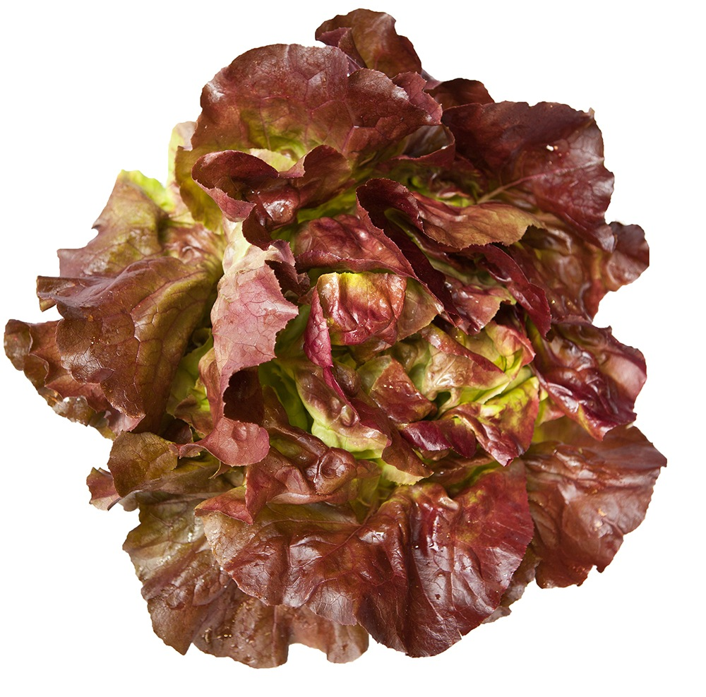 Lettuce from Lady Moon Farms